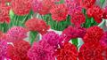 Claveles de la Floristería Hanasaki