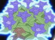 Flor corazon campanillas japonesas