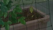 Aya se da cuenta que las plantas no estan creciendo bien