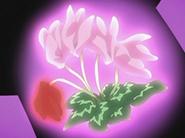 Flor Coraz´pn de Erika