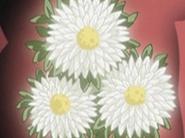 Flor corazon aster