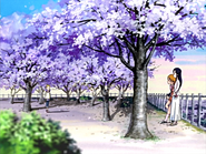 Hikari encuentra nagisa honoka cerezos