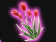 Flor corazon tulipan