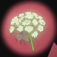 Flor corazon zanahoria