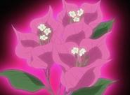 Flor corazon Bougainvillea