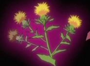 Flor corazon cartamo