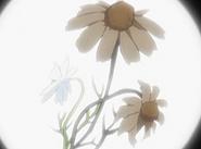 Flor corazon camomila