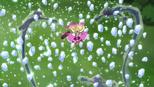 Frozen Ripple in episode 22