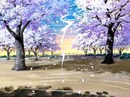 Hikari desaparece petalos cerezo