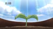Semilla de flora final