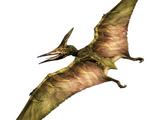Cosmetic items/Pteranodon