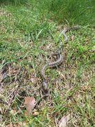 20160508-snake