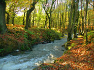 Forest of Dean (NB)