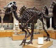 AnatotitanSkeleton01