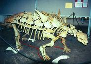 PolacanthusSkeleton01