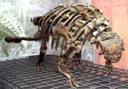 AkylosaurusSkeleton01