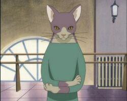 Neko-sensei mr-cat.jpg