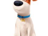 Макс (Тайная жизнь домашних животных)