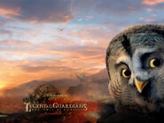 Legend of the guardians the owls of ga hoole06