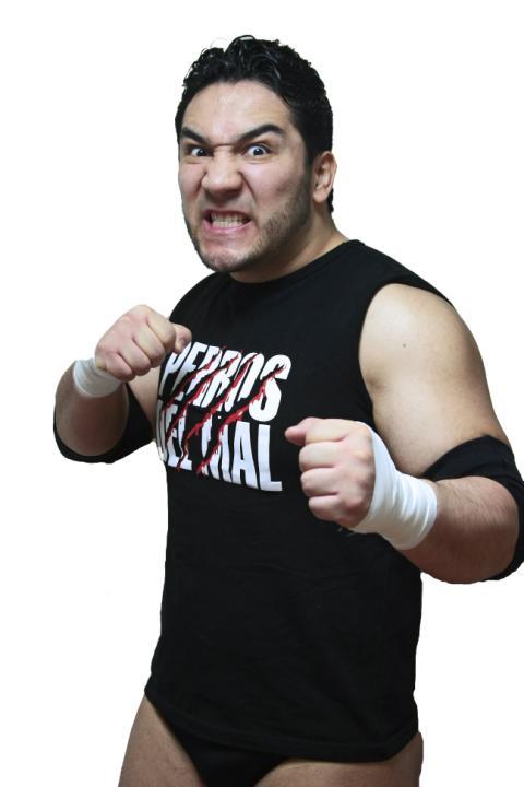 Perro Aguayo, Jr.