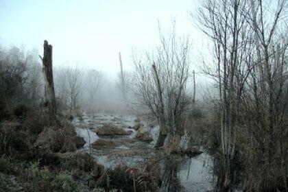 Misty-Bog.jpg