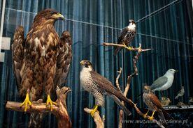 Wystawa ptaki05.jpg