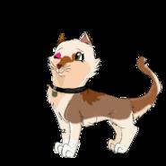 Kasha as catastrophe crew kitten