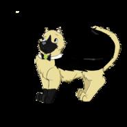 Gray as catastrophe crew cat
