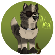Ned by Chye