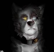 Akro in shadow