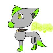 Sheider