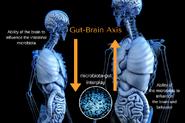 Gut-Brain-Axis 600