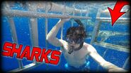 MCJUGGERNUGGETS SWIMS WITH SHARKS!
