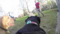 GoPro Fetch Test.png