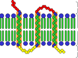 Receptor (biochemistry)