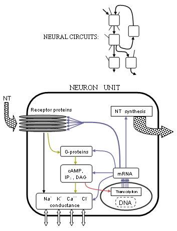 Neuropsychopharmacology
