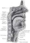 Sagittalmouth