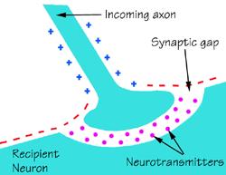 Depression - Biological factors