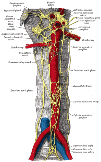 Sympathetic Trunk Psychology Wiki Fandom The filum terminale is a small thin filament of connective tissue that extends inferiorly from the apex of the conus medullaris to the sacrum. sympathetic trunk psychology wiki
