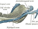 Inferior alveolar nerve