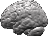List of regions in the human brain