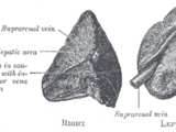 Structure of the adrenal gland