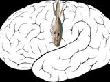Primary motor cortex