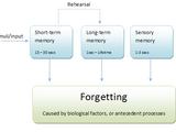 Atkinson-Shiffrin memory model