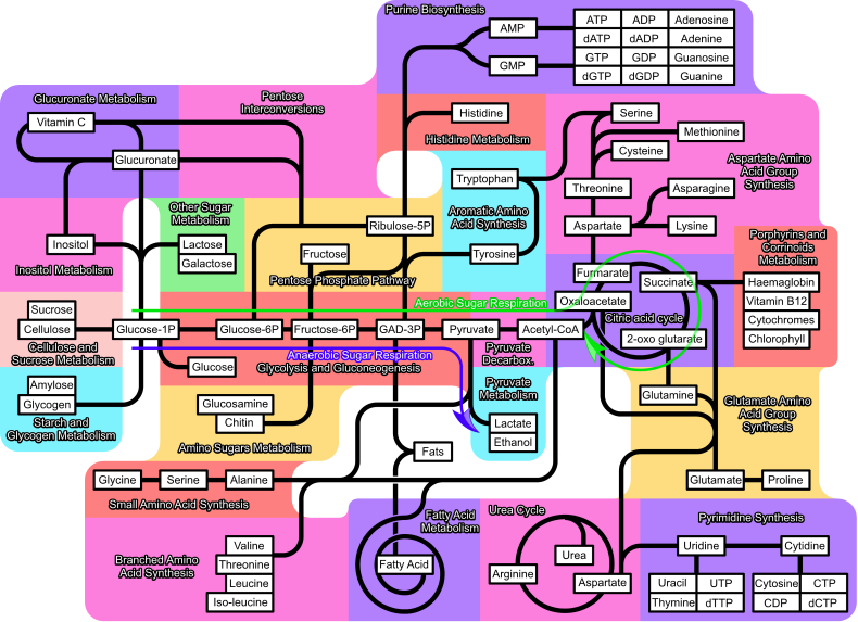 Metabolism 790px partly labeled.png