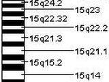 Chromosome 15 (human)