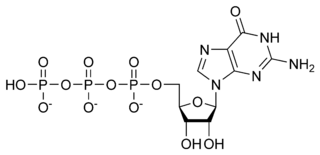 Chemical structure of GTP