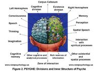 Determination and Study of Psyche in the Brain