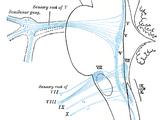 Oculomotor nucleus