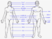 Human body features.png